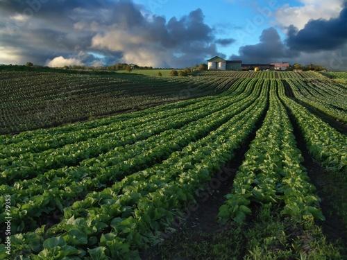 Slika na platnu crops