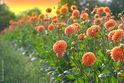 Obraz na płótnie flowers
