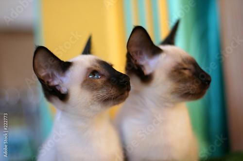 Obraz na płótnie cat