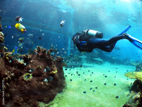 Wallpaper Mural underwater viewing
