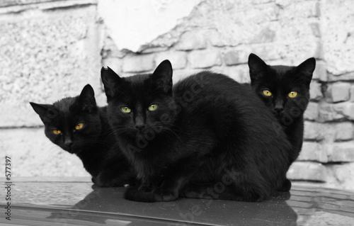tree black cats Fototapete