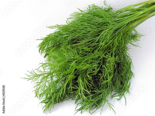 Photo a tuft of green early dill