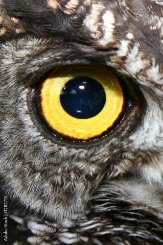 Canvas Print yellow owl eye
