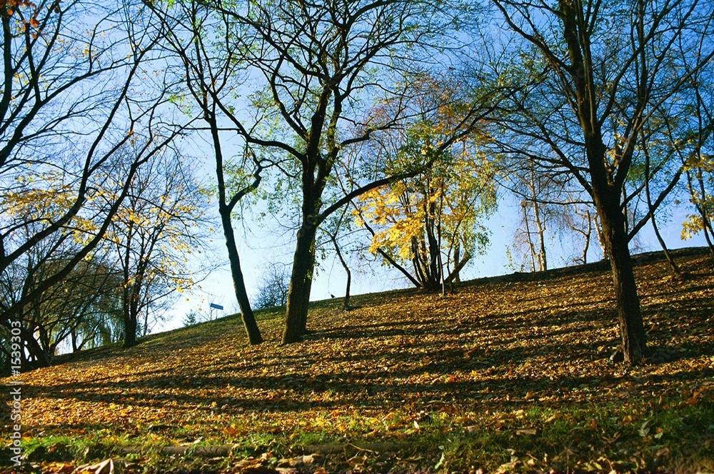 jesień - obrazy, fototapety, plakaty