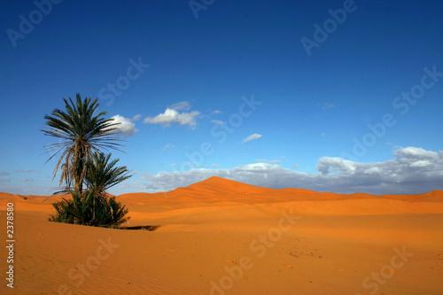 Fotografia desert