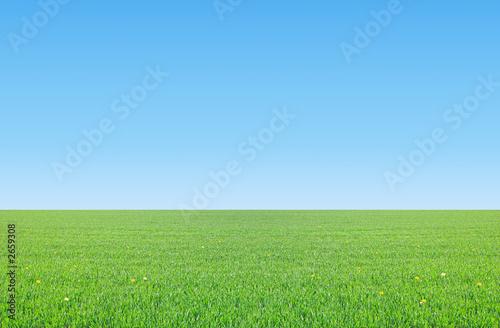 Fotografie, Obraz prairie sur ciel bleu