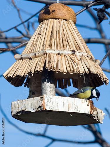 Fotografía aviary in tit