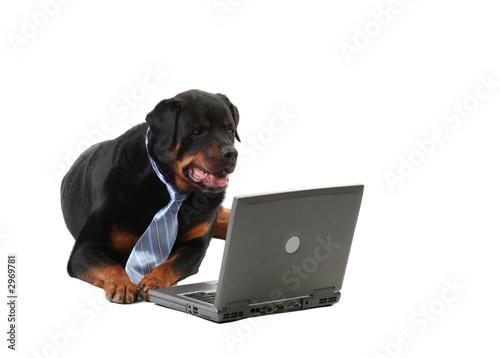Obraz na plátně dog in a tie