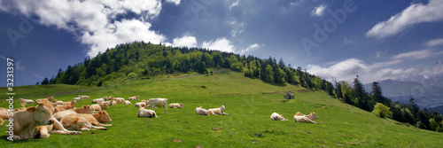 Photo les vaches à la montagne