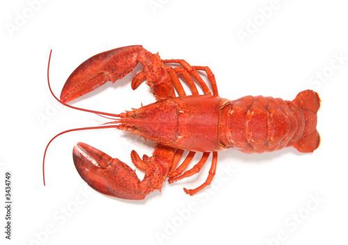 Obraz na plátně red lobster