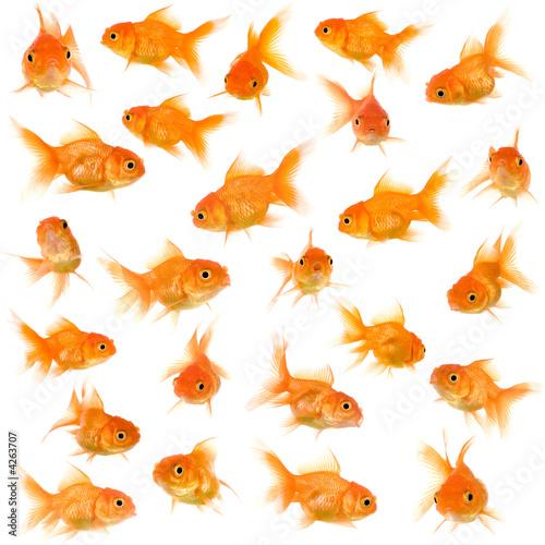 Group of goldfishes Fototapet
