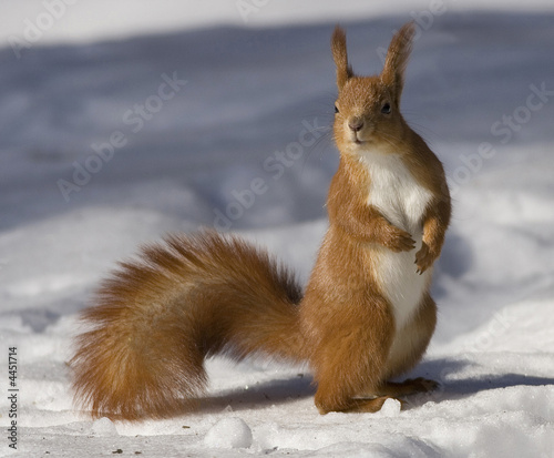 Fotografie, Obraz squirrel