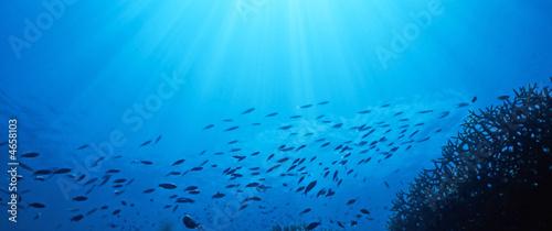 Photo fish flow