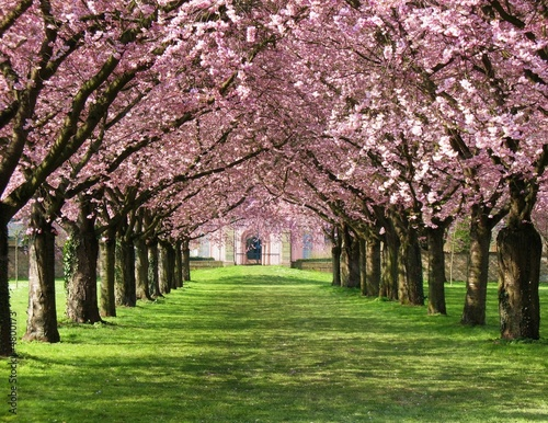 Kirschblüte #4800173