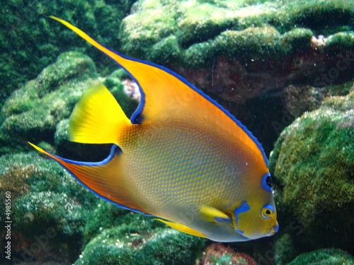 Fototapeta Ustniczek żółtooki na ścianę