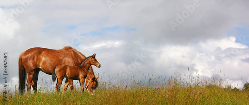 Photo horses in a field