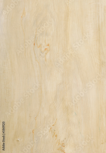 Fototapeta poplar wood texture