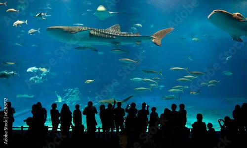 Fotografija World's largest acrylic aquarium