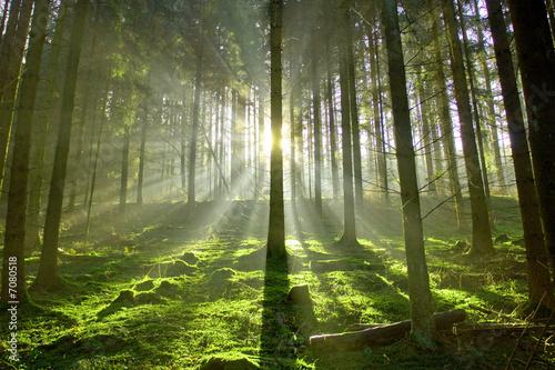 Wald im Gegenlicht #7080518