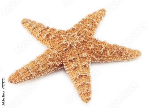 Fototapeta starfish
