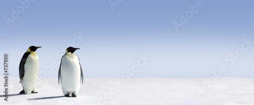 Fotografia Penguin Panorama