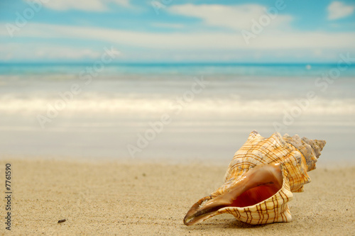 Fotografering Conch shell on beach
