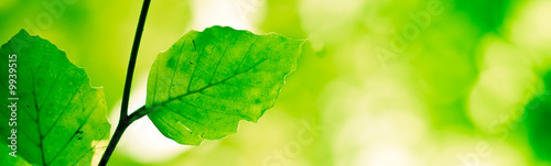banner serie - green nature background with tree branch #9939515