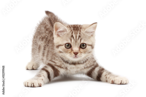 Obraz na plátně Funny kitten