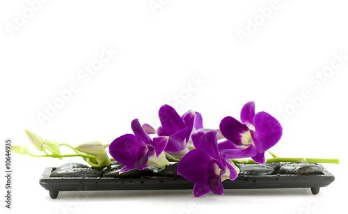 Photo Beautiful purple orchid
