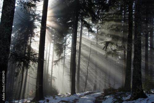 lumiere dans la brume