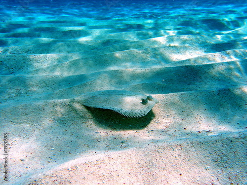 Fotografia, Obraz flounder 4