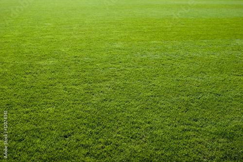 Fotografie, Obraz Green grass texture of a soccer field.