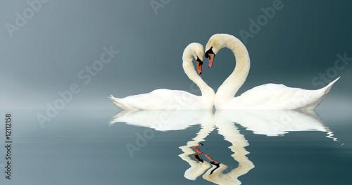 Fotografie, Obraz Love Swans
