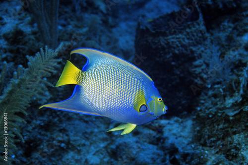 Fototapeta Ustniczek żółtooki na wymiar