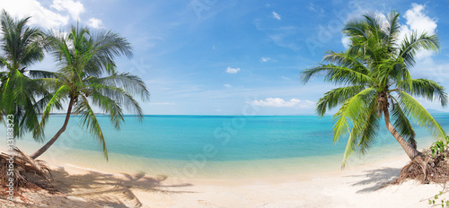 panoramic tropical beach with coconut palm #13183323