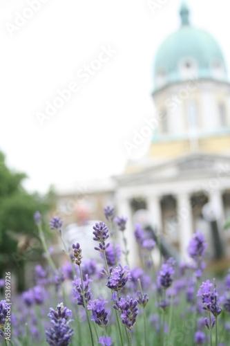 Valokuvatapetti Lavender and old building