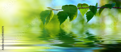 leaves of birch and water #15403574