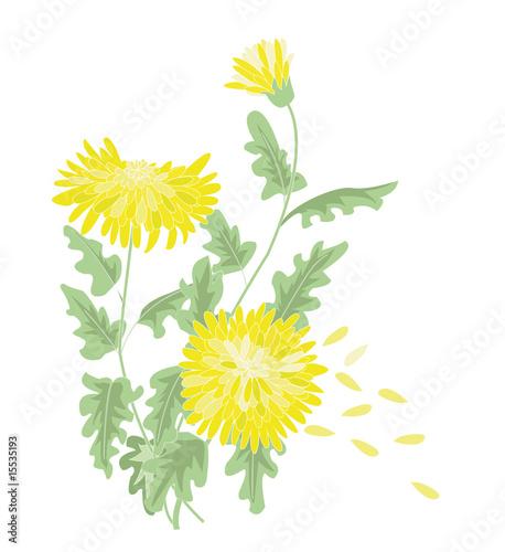Fotografia, Obraz yellow chrysanthemum