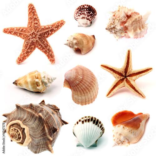 Fotografie, Obraz seashells and starfish set