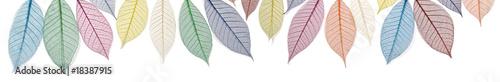 Banner of delicate skeleton leaves