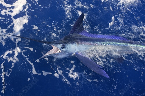 Atlantic white marlin big game sport fishing Fototapeta