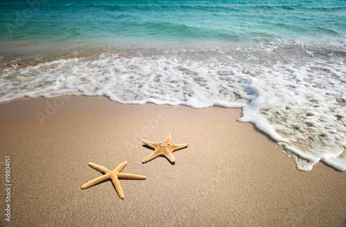 Fototapeta two starfish on a beach