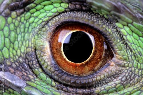 Fototapeta premium water dragon eye