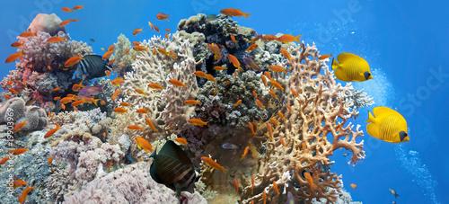 Coral scene - panorama #19903969