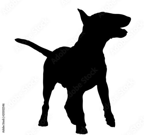 Fotografia, Obraz silhouette of a bull terrier standing - illustration