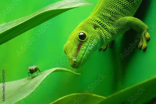 green gecko lizard