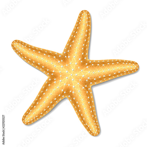 Fotografie, Obraz Starfish. Vector illustration.