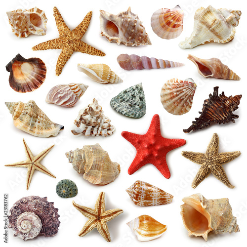 Cuadros en Lienzo Seashell collection isolated on white background