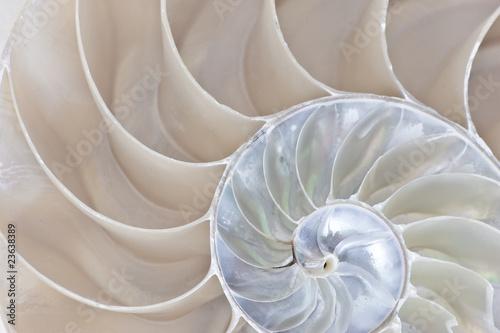 Nautilus Shell Fototapet