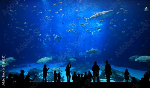 Fototapeta premium Duże akwarium - sylwetki ludzi